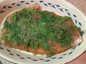 filet de saumon recouvert du mélange sel, cassonade, poivre et aneth